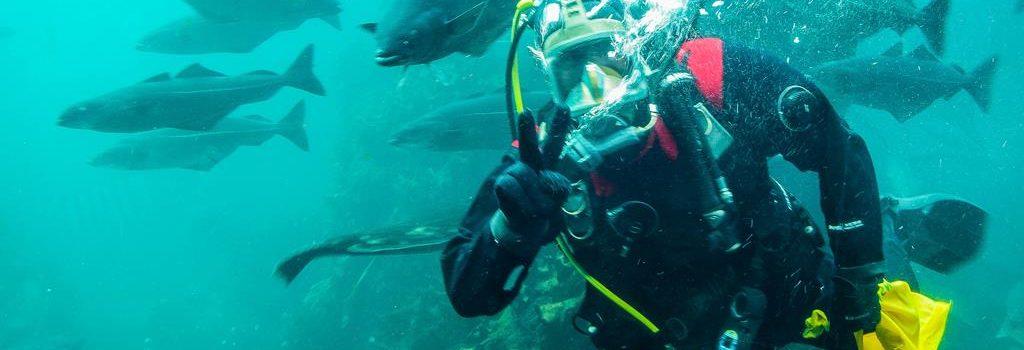 Oceanarium w Alesund